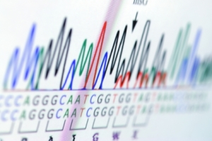 DNA-Analysis