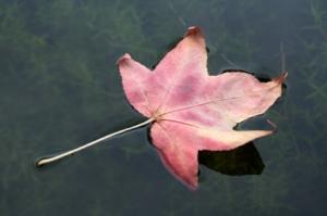 Contemplation-leaf