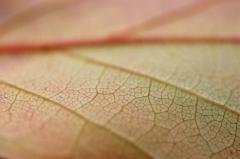 Detail-leaf