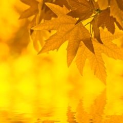 Reflecting-leaves