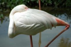 Repent-flamingo