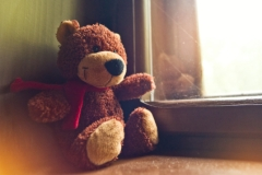 teddy bear by the window