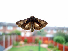 Window moth by Dan Foy is licensed under a Creative Commons Attribution 4.0 International License.