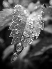 Sudden rain by Martin Börjesson is licensed under a Creative Commons Attribution 4.0 International License.