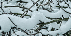 Snow by Eneko Muiño is licensed under a Creative Commons Attribution 4.0 International License.
