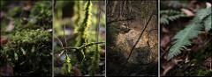 https://www.flickr.com/photos/blaubaer/6901462861/in/photolist-bvRNsZ-aC1JBo-9EAT9L-9ftNqc-egGUAs-5deowu-83QbJi-hm751S-5Vk7Gc-9wS3vT-6WX2fE-7hxkg-dMVSek-d13ABo-am7sR-ogpMLj-52syYt-9zS2n-egB9vn-6YCbgK-6PP87z-dAdGK1-9TLTyG-4pF5cU-dqf5gA-egXVUr-S41ycD-5hRhji-dRKGvq-2TgGDx-63ueE8-anL9rm-pjo7u-abEgYX-SZqVUZ-9TjwE3-46Wg39-5rUPkE-GYiPi-4AZdDM-bt1pfW-5yjX5H-egGUTd-bjmfHt-7ZQgjG-8B9ei2-agdDmh-BfvoZX-zWXpo-4jiUCR